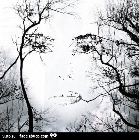 4dy6851hl3-volto-creato-con-i-rami-degli-alberi-buongiorno_a