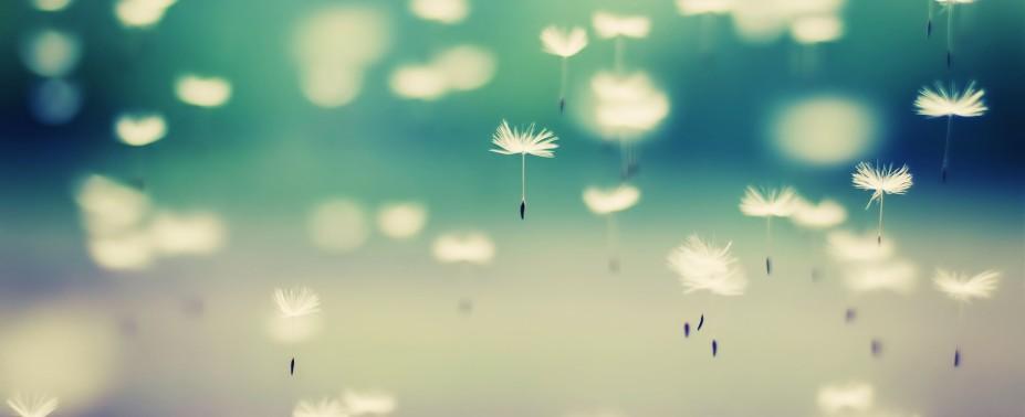 tumblr_static_beautiful-dandelion-wallpaper-927x378